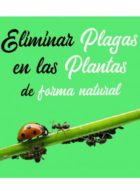 Modos de eliminar plagas de las plantas de forma natural