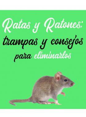 Ratas y ratones: Trampas y consejos para eliminarlos